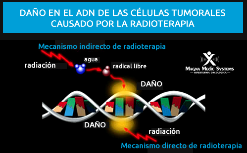 radiation-damages-dna(1).png